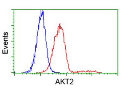 AKT2 Monoclonal Antibody