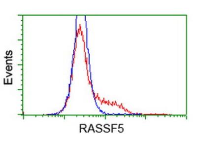RASSF5 / RAPL Monoclonal Antibody