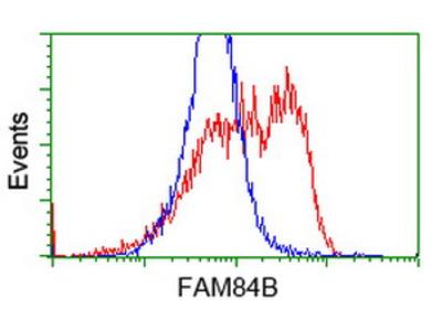 FAM84B Monoclonal Antibody