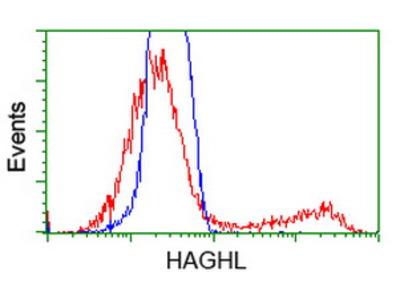 HAGHL Monoclonal Antibody