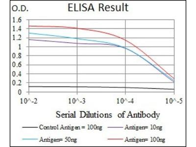 iNOS Antibody (4E5)