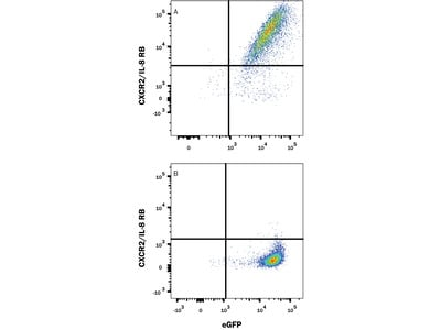 Mouse CXCR2 / IL-8RB Antibody