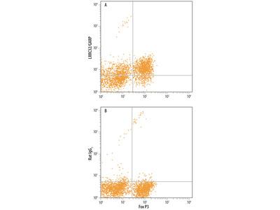 LRRC32 /GARP Antibody