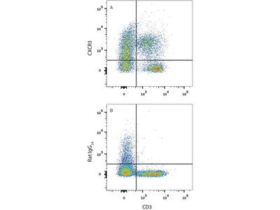 Mouse CXCR3 Antibody