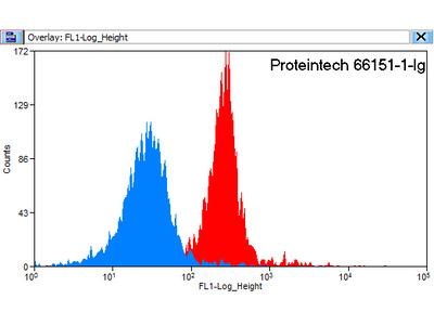 HBE1-Specific antibody