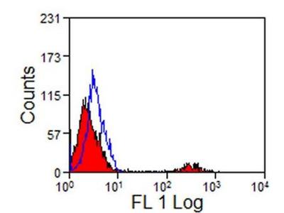 CD8 Antibody (12.C7)