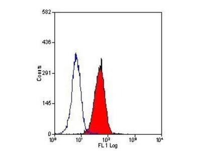 Fas Ligand /TNFSF6 Antibody (14C2)