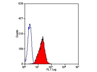 anti CD178 / Fas Ligand