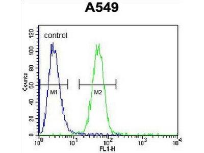 anti-CARD16 antibody