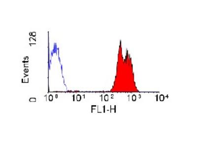anti CD43 / Leukosialin