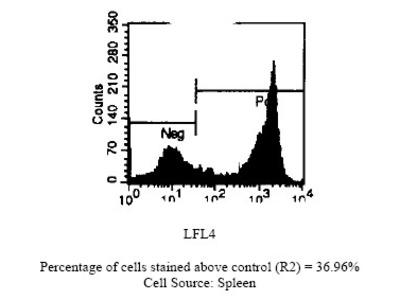 anti CD45 / LCA (CD45R)