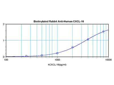 CXCL16 rabbit polyclonal antibody, Biotin