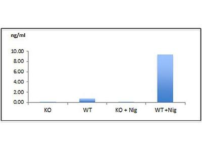 anti-Caspase 1 (Death caspase-1) antibody