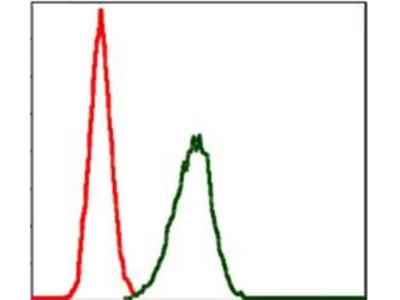 LPlunc1 antibody
