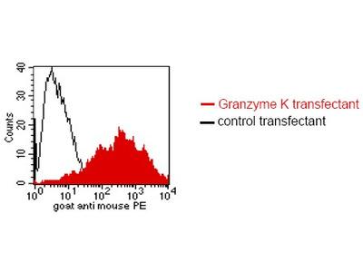 anti Granzyme K (GZMK)