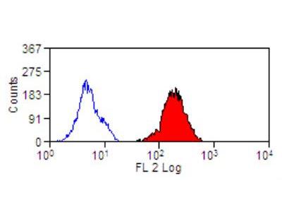 DEC-205 / CD205 Antibody (HD30)