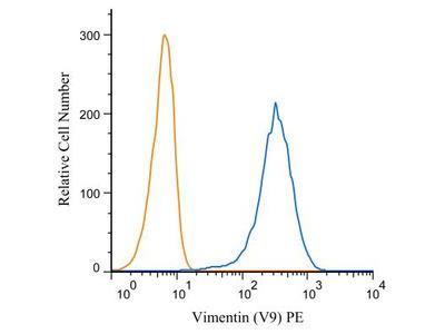 Vimentin Antibody (V9) [PE]