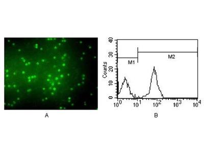 CD3 Monoclonal Antibody (4D10A6)