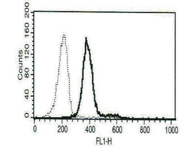 anti-Carcinoembryonic Antigen-Related Cell Adhesion Molecule 1 (Biliary Glycoprotein) (CEACAM1) antibody