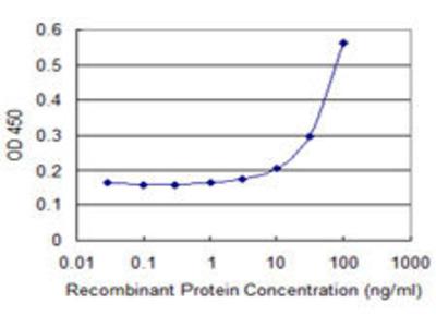 anti-Arrestin 3, Retinal (X-Arrestin) (ARR3) (AA 1-359), (full length) antibody