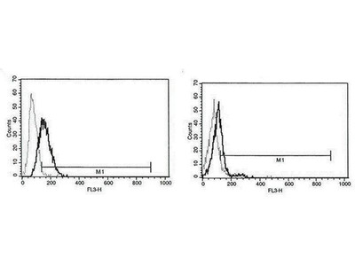 anti-Perforin 1 (Pore Forming Protein) (PRF1) antibody (PerCP)