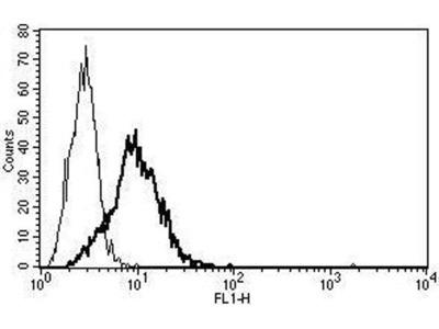 anti-NTSR1 (Neurotensin Receptor 1) antibody