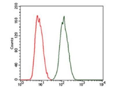 Protein Kinase cAMP-Activated Catalytic Subunit Gamma (PRKACG) Antibody