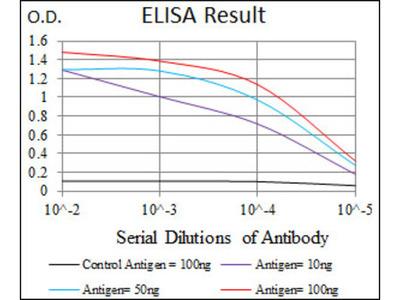 Activated Leukocyte Cell Adhesion Molecule / CD166 (ALCAM) Antibody