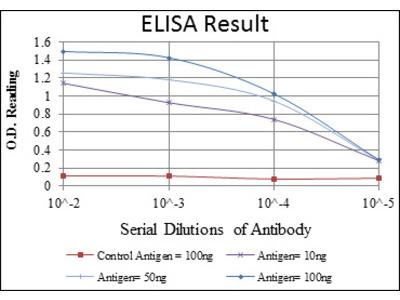 Actin Alpha 2, Smooth Muscle (ACTA2) Antibody