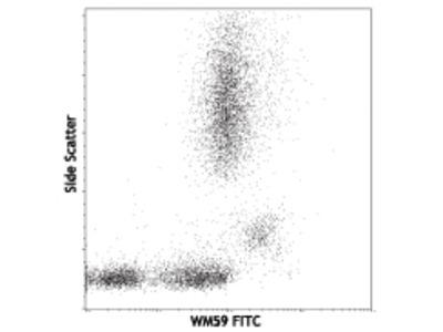 PECAM-1 / CD31 Monoclonal Antibody