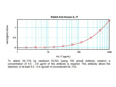 IL-17A Antibody