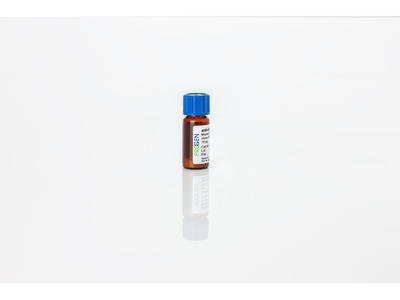 anti-Clathrin mouse monoclonal, CHC 5.9, lyophilized, purified