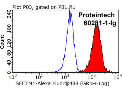 SECTM1 antibody