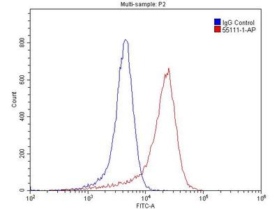 TRPM1 Antibody