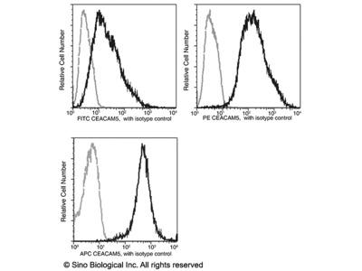 CEACAM5 / CD66e Antibody (FITC), Rabbit MAb