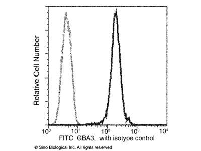 GBA3 Antibody (FITC), Rabbit MAb