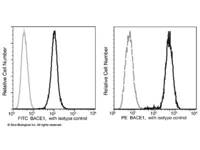 BACE1 / ASP2 Antibody (FITC), Rabbit MAb