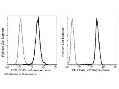 GBA3 Antibody (PE), Mouse MAb