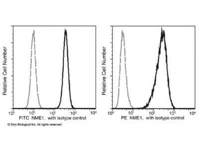 NME1 / NDKA Antibody (FITC), Mouse MAb