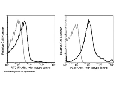 IFNAR1 Antibody (FITC), Rabbit MAb