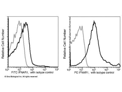 IFNAR1 Antibody (PE), Rabbit MAb