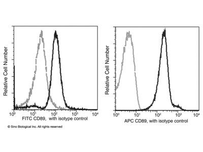 CD89 / FCAR Antibody (FITC), Mouse MAb