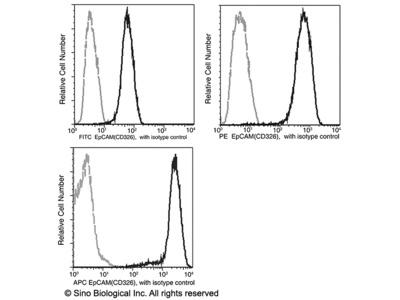 EpCAM / TROP-1 / TACSTD1 Antibody (FITC), Rabbit MAb