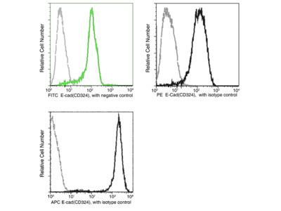 E-Cadherin / CDH1 / E-cad / CD324 Antibody (FITC), Mouse MAb