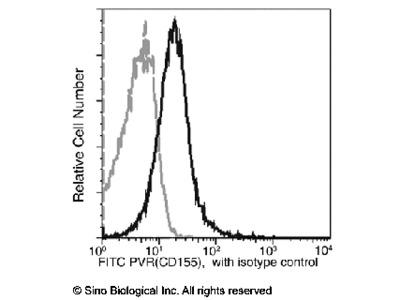 CD155 / PVR Antibody (FITC), Rabbit MAb