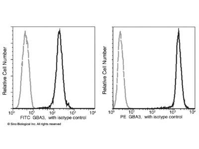 GBA3 Antibody (PE), Rabbit MAb