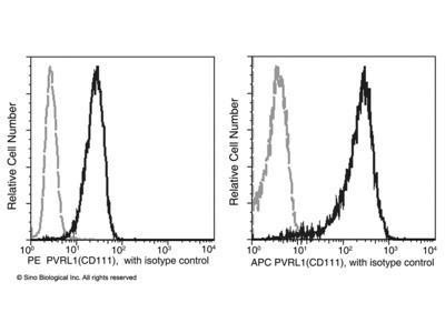 CD111 / Nectin-1 / PVRL1 Antibody (PE), Mouse MAb