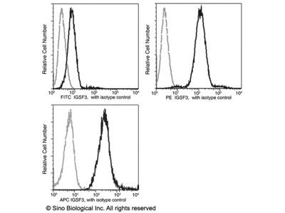 IGSF3 Antibody (PE), Mouse MAb