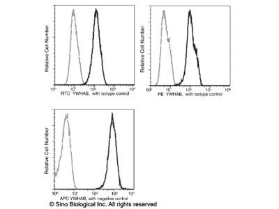 14-3-3 beta / YWHAB Antibody (FITC), Mouse MAb