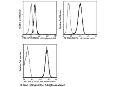 B7-H3 / CD276 Antibody (FITC), Mouse MAb
